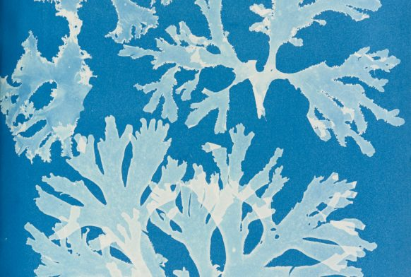 Celebrating Women in Science: Anna Atkins