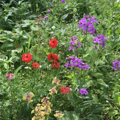 A close up of a bed of wildflowers with red, purple and white small blooms growing
