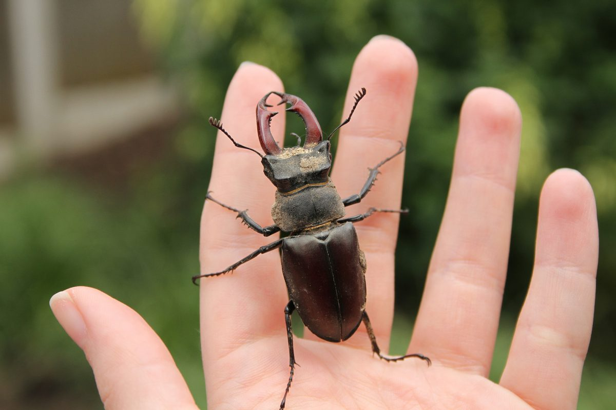 large insect with 8 legs and two pincers on tips of a persons fingers.