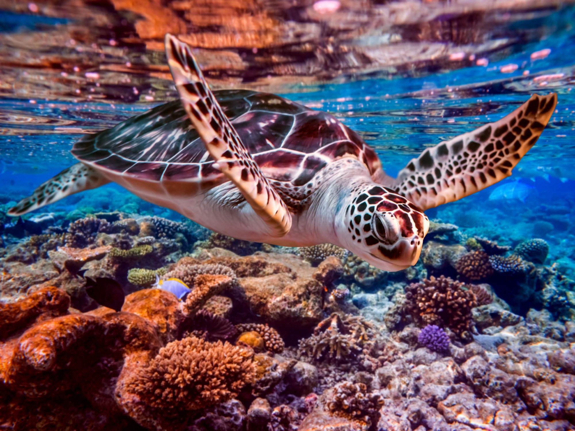 A sea turtle swims under water in a tropical sea