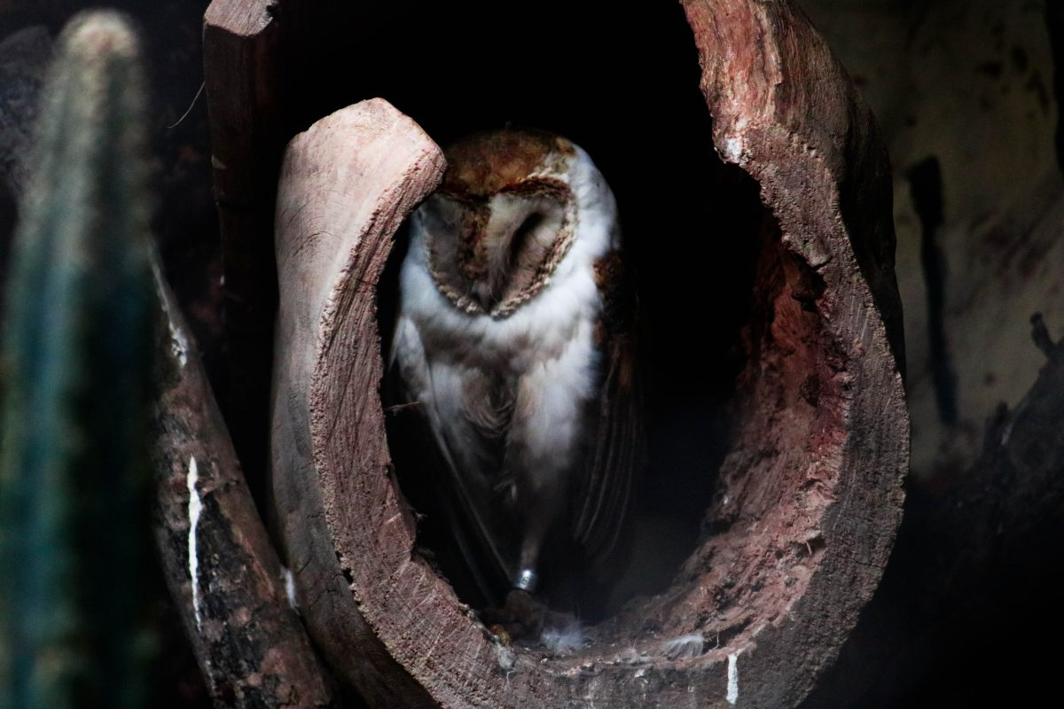 Owl hiding in curved hole in dark lighting