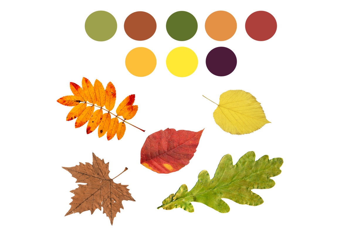 Assortment of leaves with coloured circles.