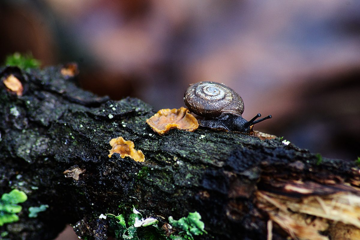 Snail on dead log, background is out pf focus