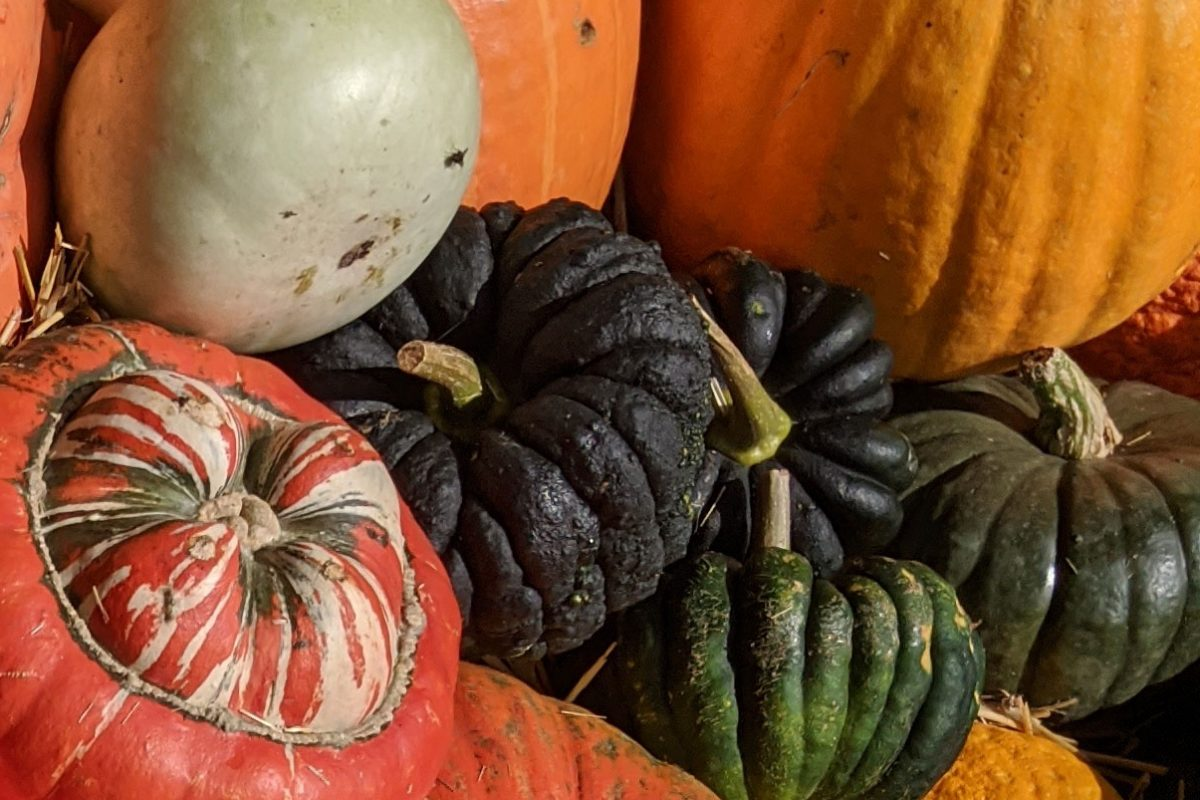 Black pumpkins