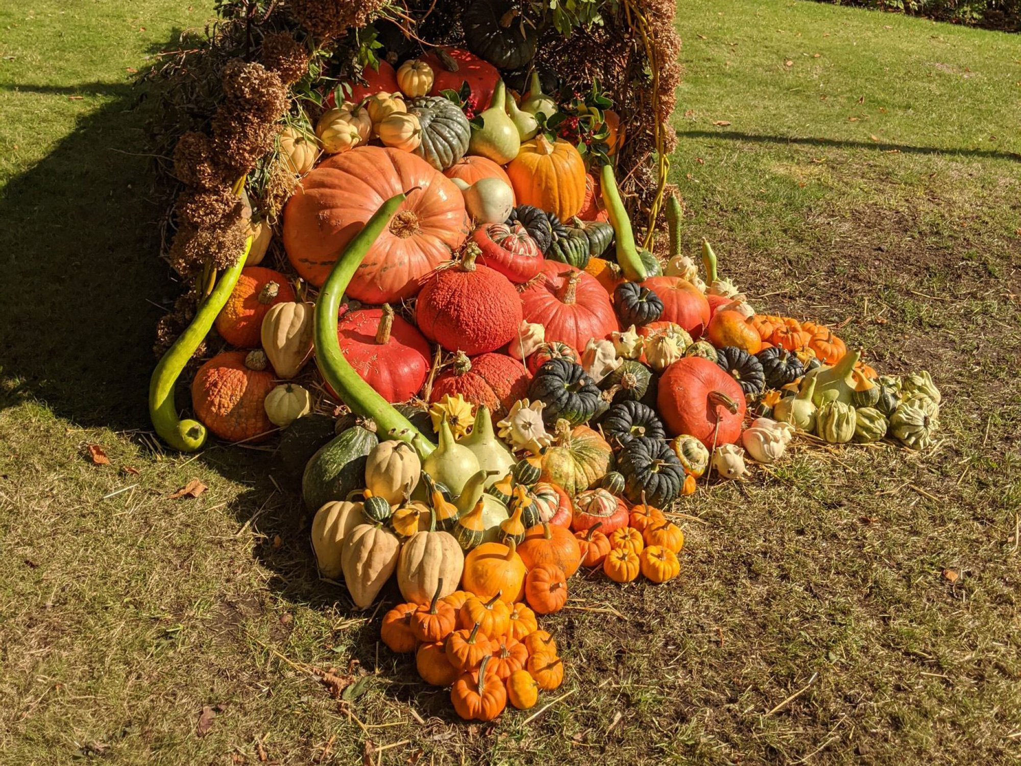 A cornucopia of pumpkins squash and gourds