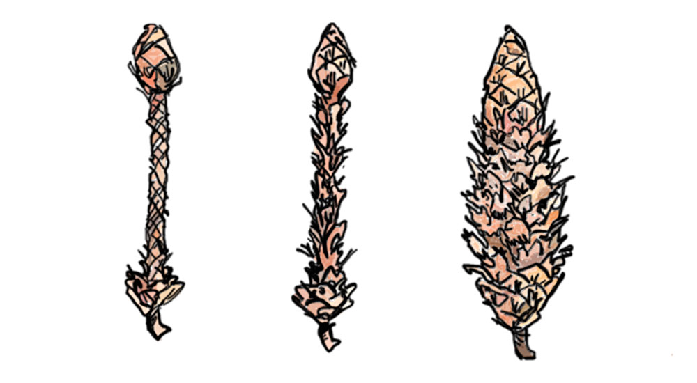 Three cones drawn with different teeth marks