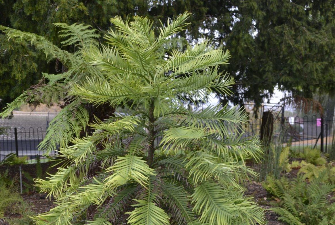 Bushy tree in gardens