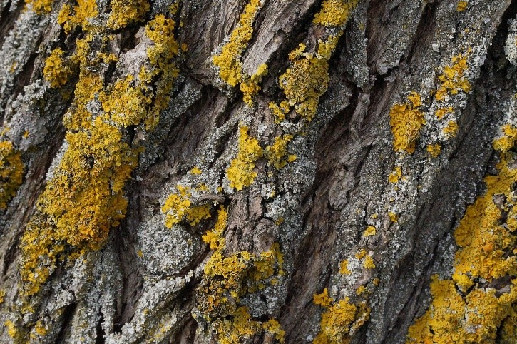Close up of tree bark with brownish growth on surface