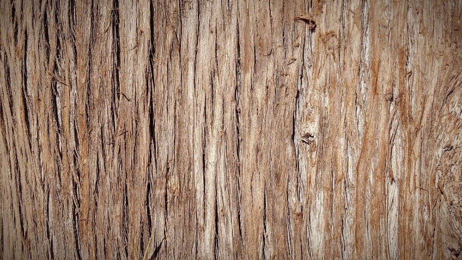 Close up of bark with horizontal lines