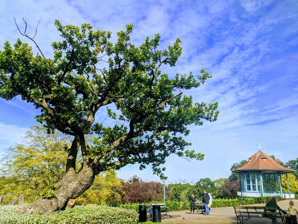 old tree in gardens with bandstand and city skyline in the background