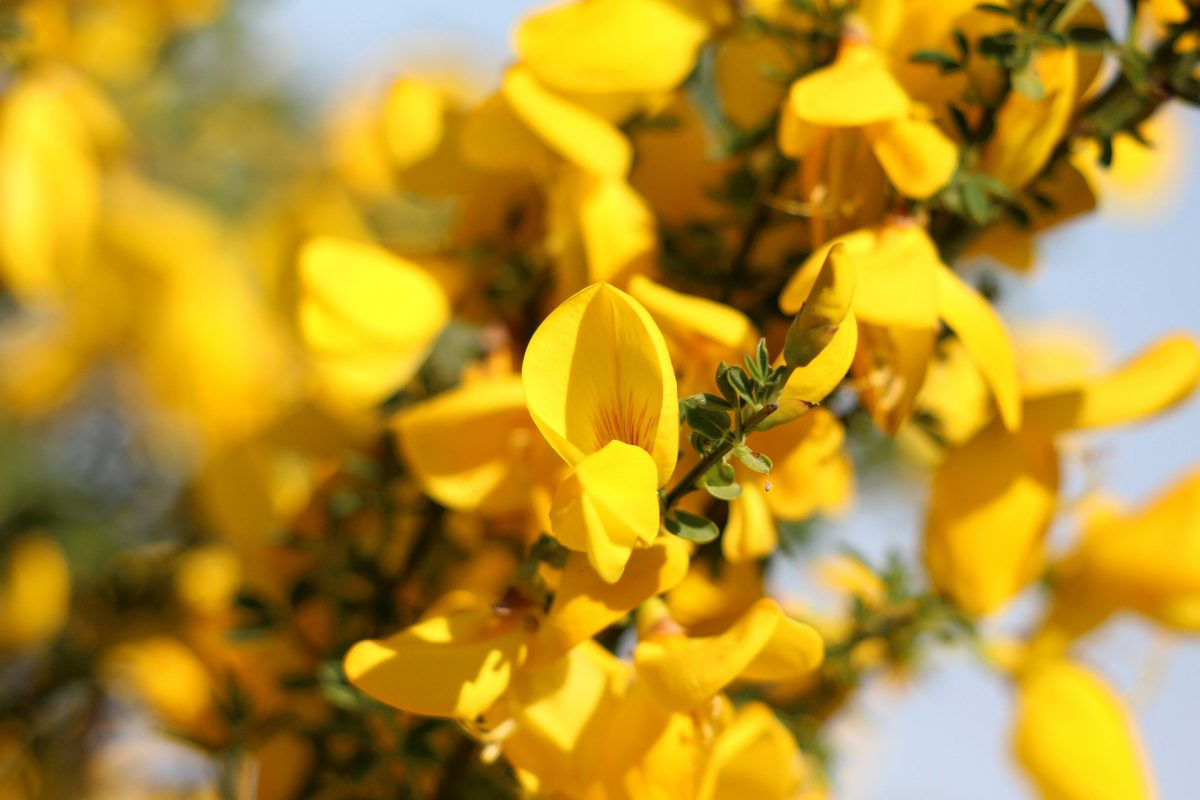 Open yellow flower seeds on branch