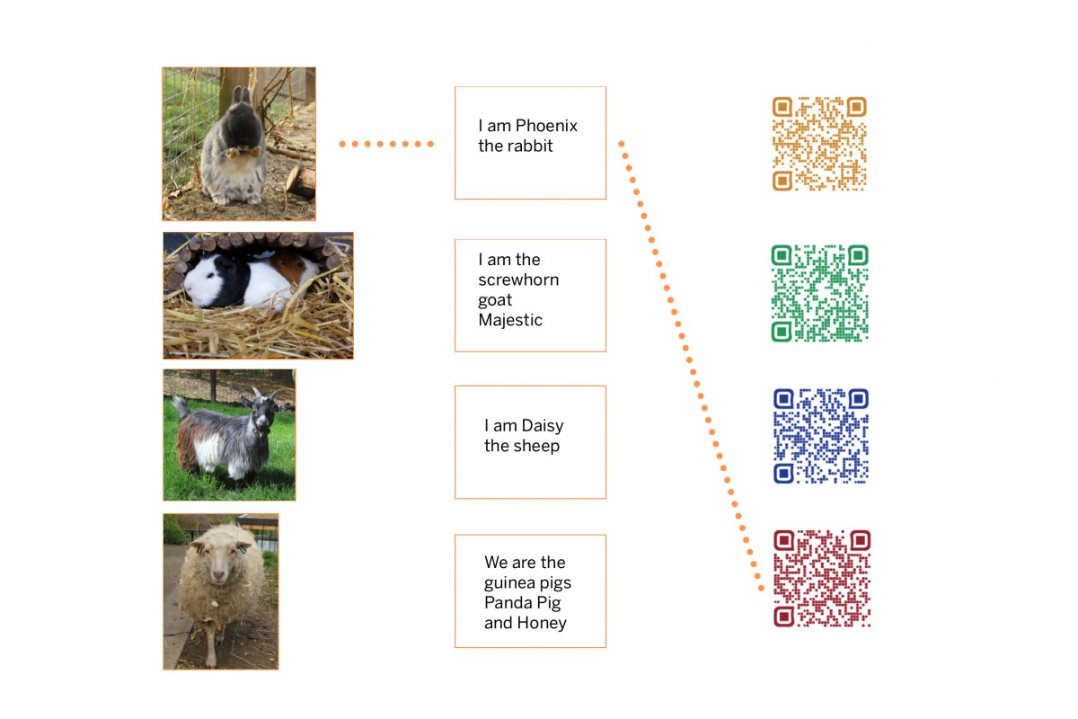 Rabbit, guinea pig, goat, daisy. Text reads I am Phoenix the rabbit, I am screwhorn goat, Majestic, I am Daisy the sheep. We are the guinea pigs, Panda Pig and Honey. In a column next to this there are 4 QR codes.