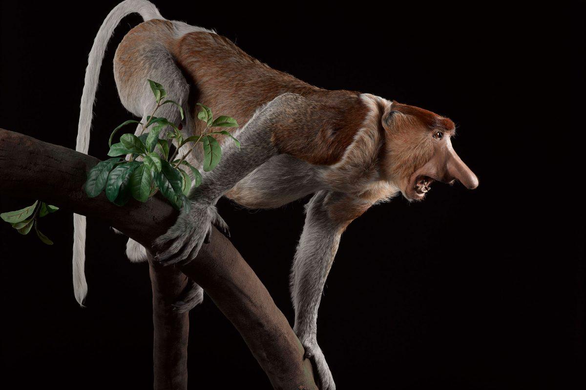 A taxidermy monkey on a branch