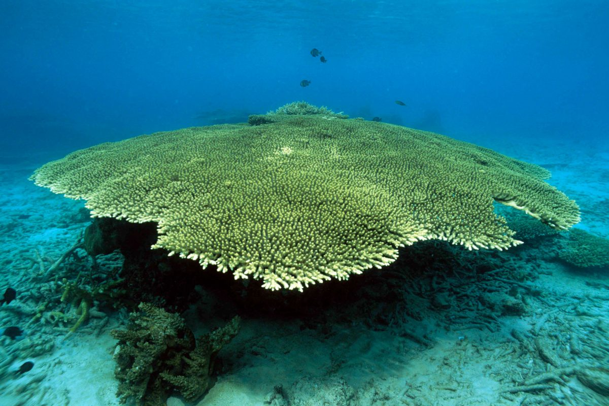 A large green coral underwater in the sea