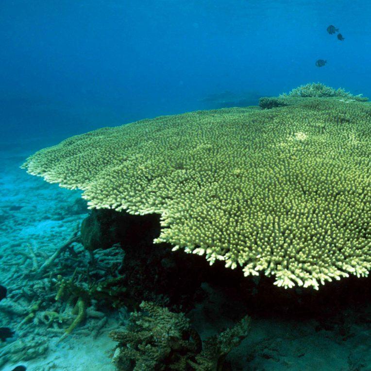 Help us save coral reefs