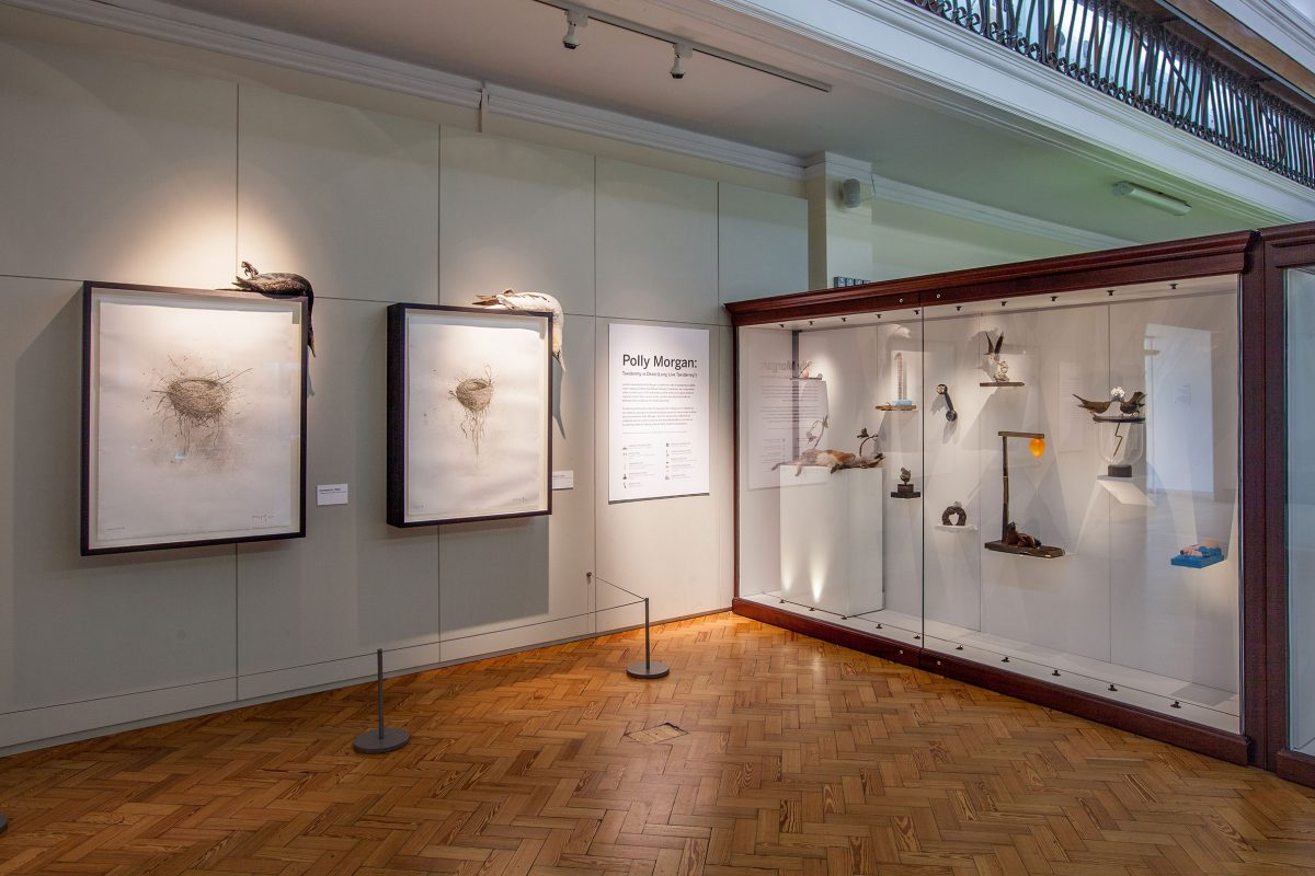 A gallery case and wall in the Horniman Museum