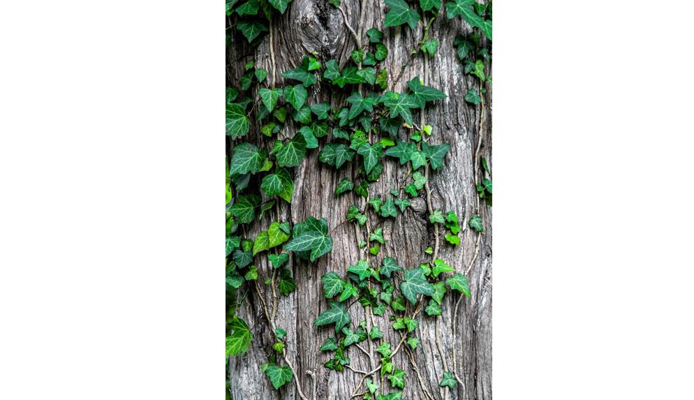 Leaves on tree bark