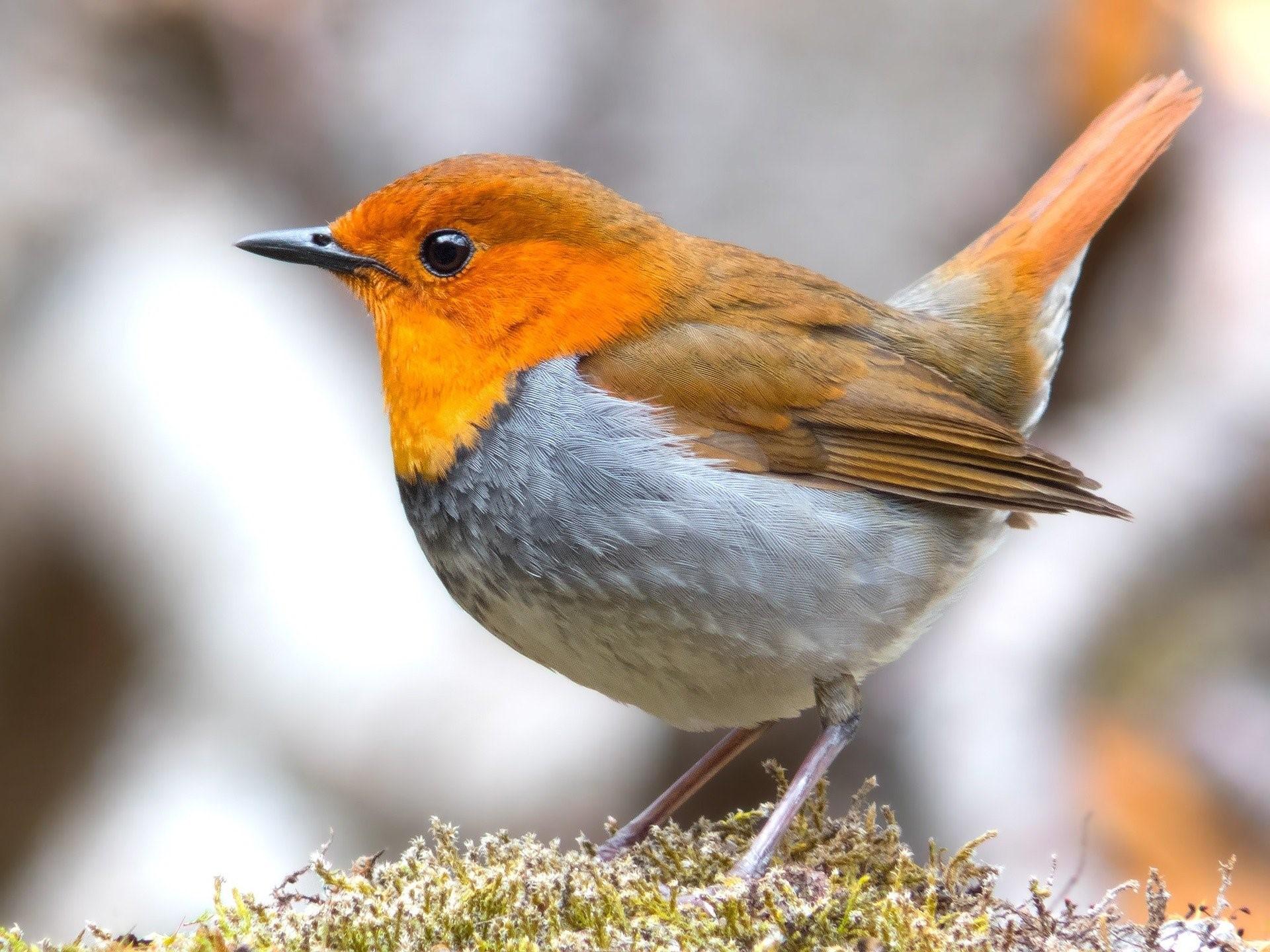 Bird standing on moss.