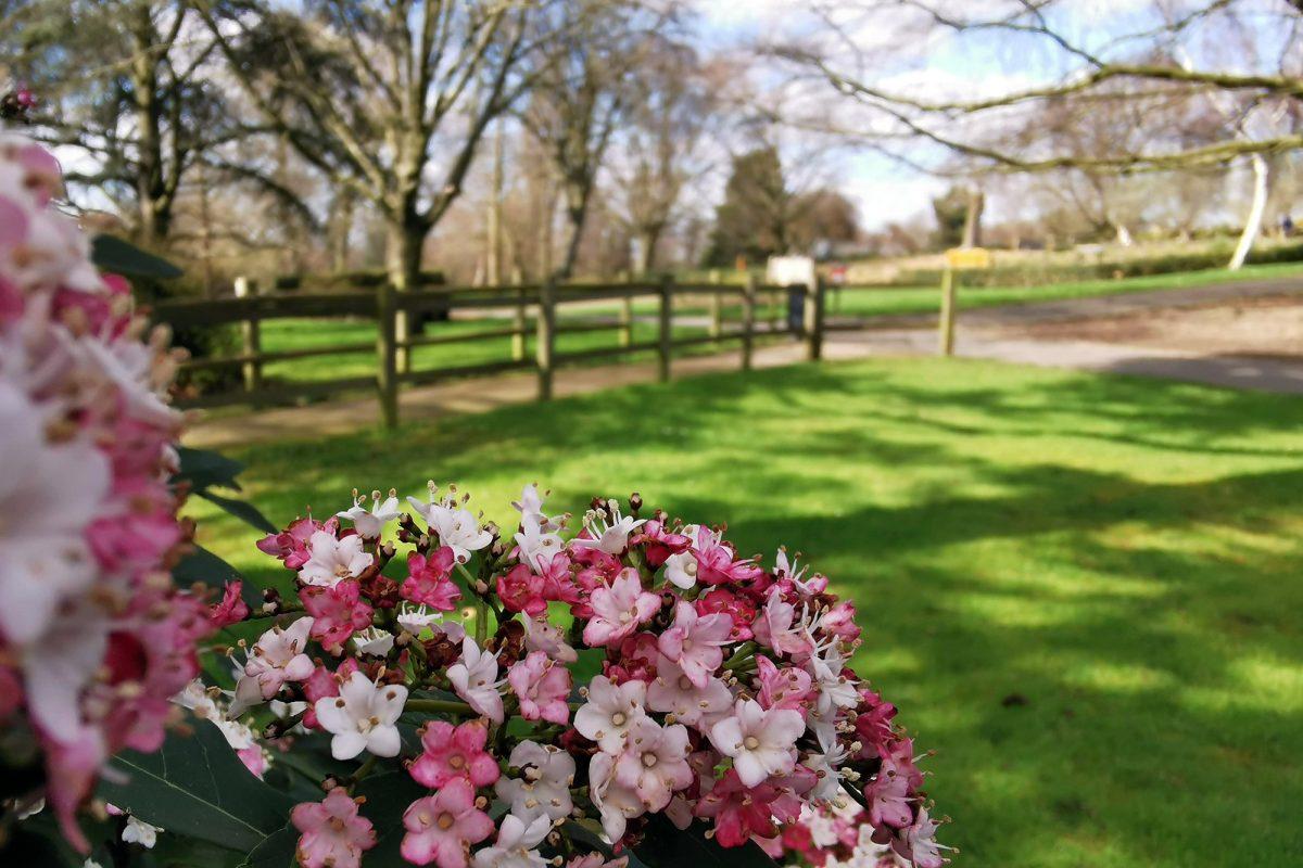 Flowers overlooking green field