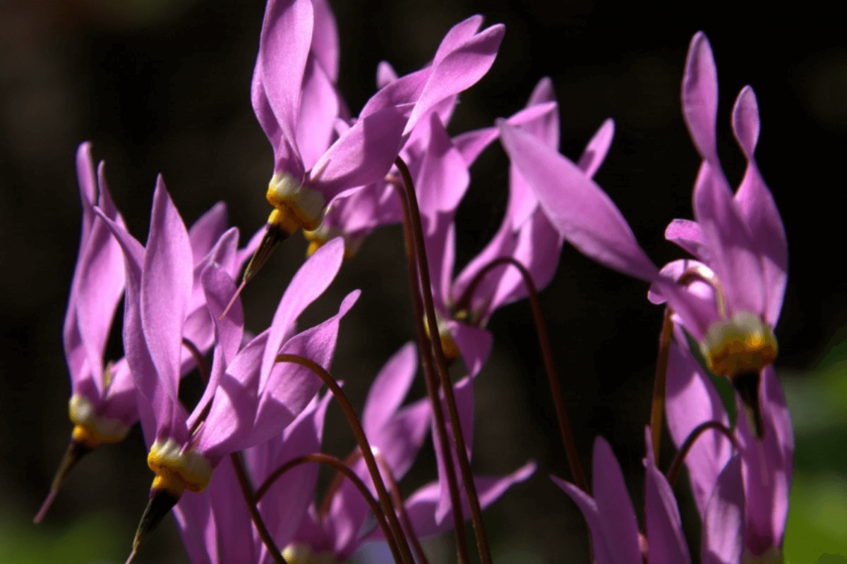 Pink flowers with long thin petals
