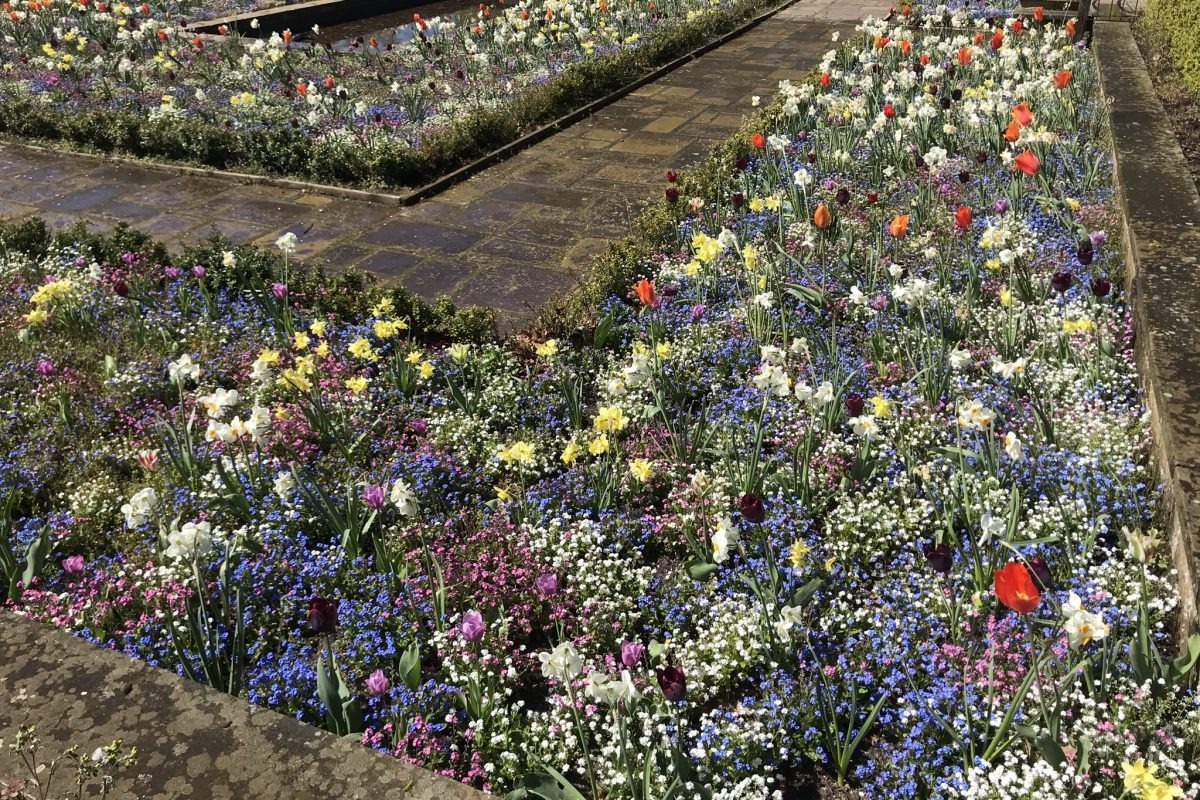 A flower bed filled with colourful flowers including tulips