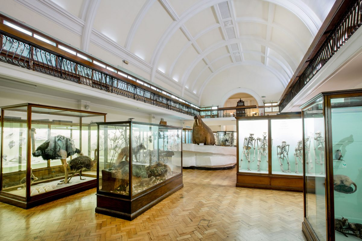 Natural History Gallery at the Horniman