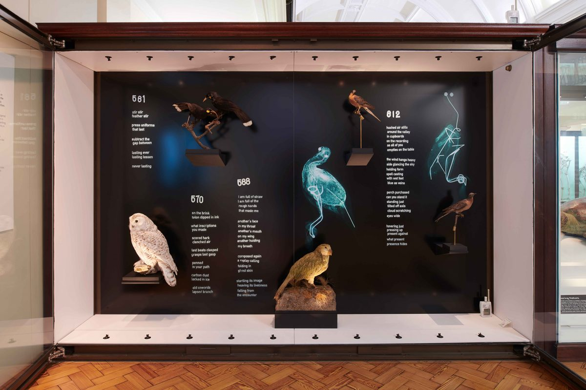 Display of birds and x-rays of birds in Natural History Gallery.